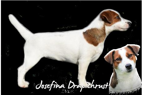 Josefina Drapichrust